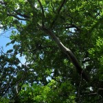 arboriculture01