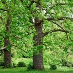 arboriculture04