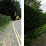 Hedge Flailing