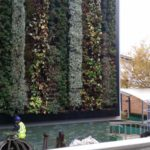 middx uni green wall